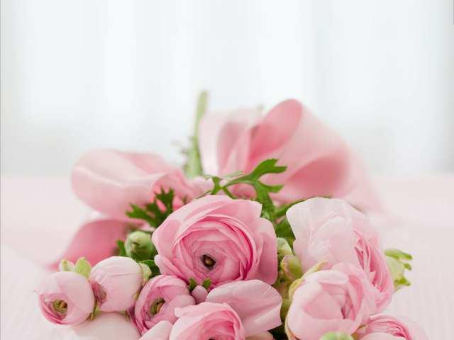 Pilea virágüzlet